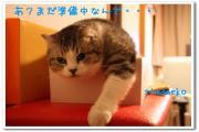 猫まんじゅうひとつ下さい(=^エ^=)