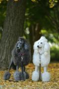 しゅっぽっぽの犬写真館