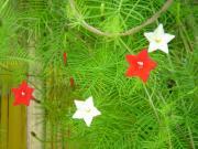 蒜山(ひるぜん)・けんご&ひろこの園芸日記(webry)