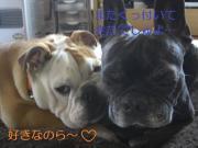 ☆ルイ&文太&どん太☆猫犬兄弟