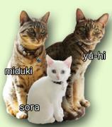 ウチの猫たち三食昼寝つき