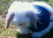 ウサギのファジローと一緒