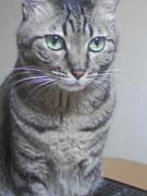 猫大好き♪ 猫バカ日記
