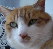 メル(去勢)の猫画像ブログ