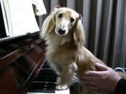 ピアノ時々オーボエ、ところによりイルムetc.