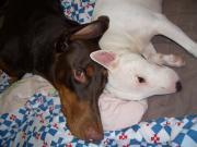 d-ma hair&my dogs