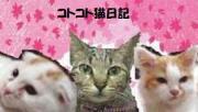コトコト猫日記〜猫と子供と病気〜京都発