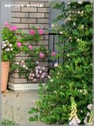 るむりさんの おうちと庭