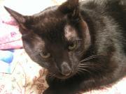 黒猫と黒猫とアタシの生活