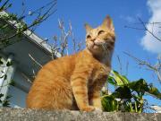 私と猫の気ままな島暮らし
