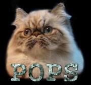 Pops Log ポップス ログ