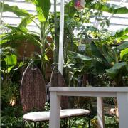 南国の植物に癒されながら、おいしいゴハンはいかが?