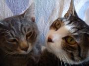 おさかな三兄弟の猫ブログ