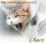 ペットウェア Chaco(チャコ)