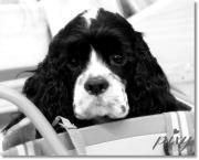ホリスティックケア 大切な命のために。。。pixy.DOG
