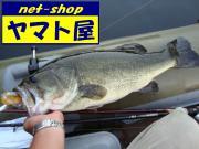 四国中央市 ヤマト屋店長ブログ Vol.2
