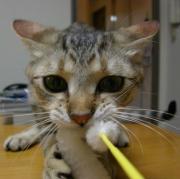 奇跡の猫 〜それはamou〜