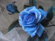 布の花〜花びらの行方 Ⅱ