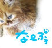立ち耳ロングスコ猫♪なーブロ
