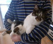 猫三昧パート2