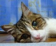 くいしんぼう猫