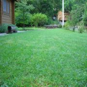芝生の庭ガーデニング日記