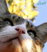うち猫たちの通信簿