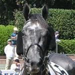 Dark Horse Years