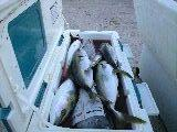 釣り好きな人の火曜日釣り日記