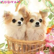 ペットモデルマルひなアニマルプロダクションM.Dogs