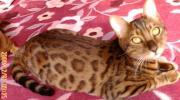猫にILOVEYOU
