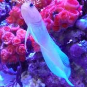 うおっち&ももの海水魚日記2