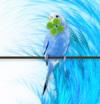 Turquoiz Bleu