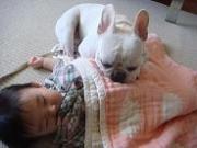 育犬&育児生活