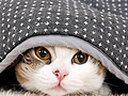 ネコ猫ユーチューブ動画 にゃん