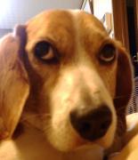 某家とその同居犬のブログ
