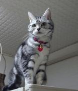 お手猫とフミフミさん