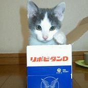 猫とプロレス