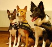 with my dogs