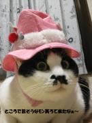 ぶーBoo猫ニャン