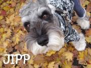 Schna Life 〜JIPPの足あと〜