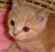 店長の犬猫な日々 山形ペットショップ店長ブログ