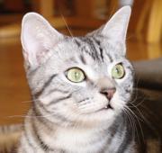 まぁにゃんが猫を飼うの段