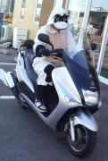 バイクに乗る看護学生ジョセのアメブロ