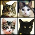 猫のいる生活・ロサンゼルス編 -Cats in Los Angeles-