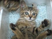 猫家の住人