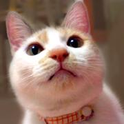 猫中心的生活*ツカノサクラ*