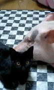 お豚様と旦那様
