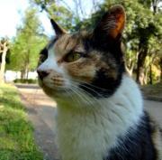 ねこ世の猫こたつなブログ