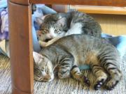 トラ&スズの猫畜生日記